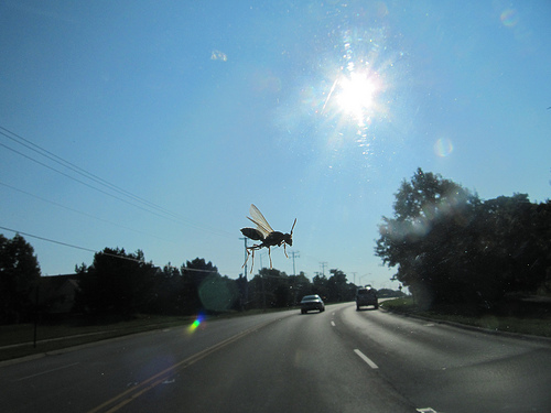 How to remove bugs from windshield