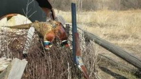 Cleaning Pheasants: Step by Step Instruction